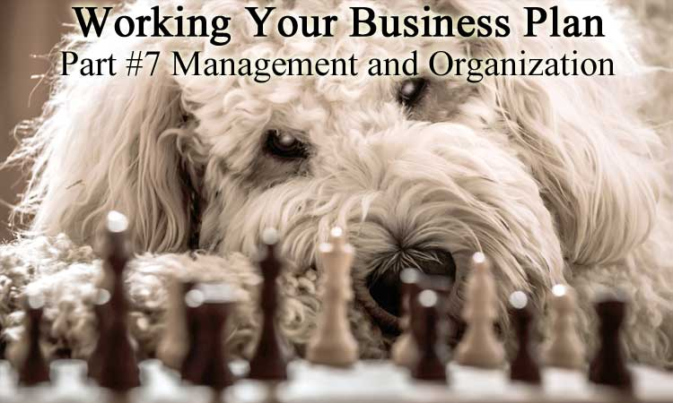 Updating Your Business Plan for 2019 Part 7 - Management & Organization